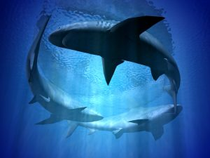Circling Sharks: how to repel sharks