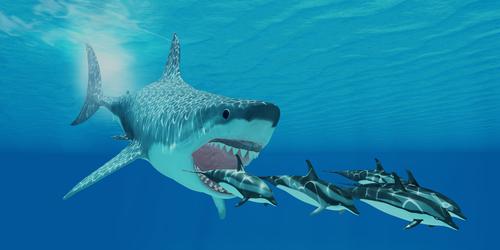 Megalodon shark chasing dolphins