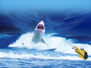 Shark attacks: Predatory shark approaching a fisherman