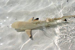 A New born shark