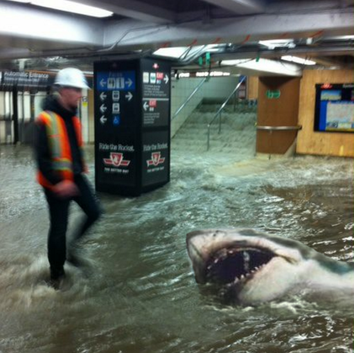 Fake shark picture at Union station