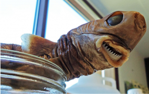 Cookiecutter shark specimen