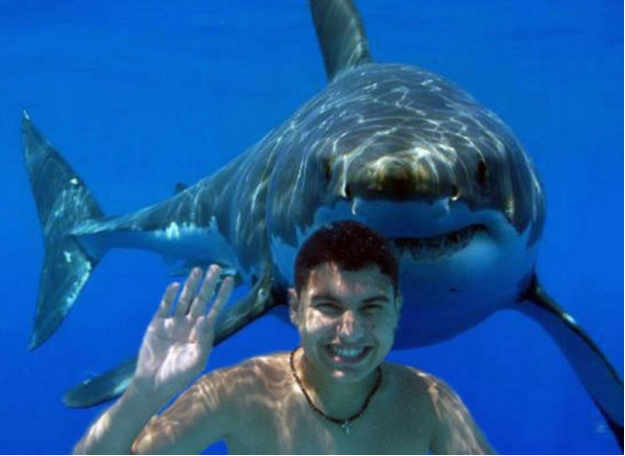 Fake shark pictures: Boy waving with a shark behind him