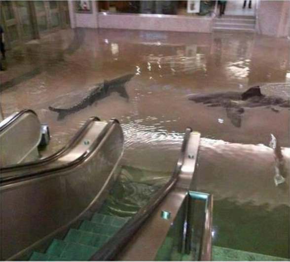 Fake picture of sharks