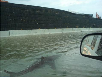 Fake shark pictures: shark in the flooded streets of Puerto Rico