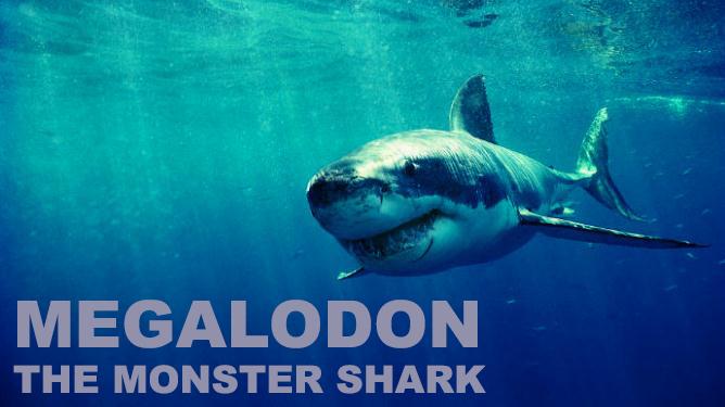 Shark Week Megalodon Banner