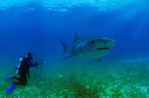 Diving With Sharks Can Be A Memorable Experience