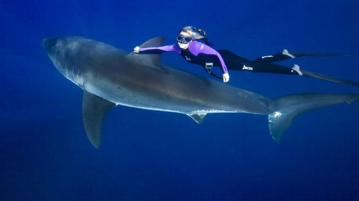 Ocean Ramsey With A Great White Shark