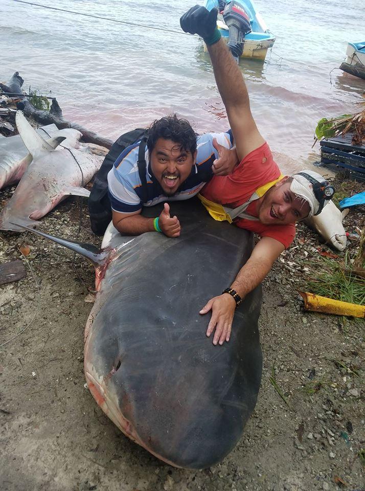 Shark Fishing in Belize